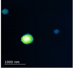 An AFM image of mica surface with three protein spheres on it